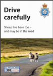 NYP18-0038 - Poster: Drive Safely - Sheep